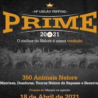 14º LEILÃO VIRTUAL PRIME