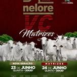 LEILÃO MATRIZES NELORE VC - 1° ETAPA E 2° ETAPA