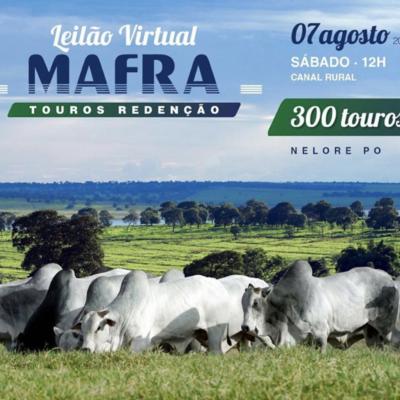 LEILÃO VIRTUAL MAFRA TOUROS REDENÇÃO