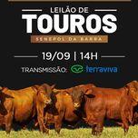 LEILÃO DE TOUROS SENEPOL DA BARRA