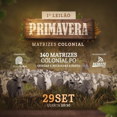 1° LEILÃO PRIMAVERA MATRIZES COLONIAL