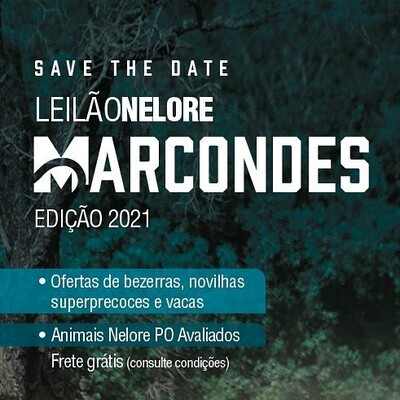 Leilão Nelore Marcondes - Edição 2021