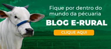 Blog e-rural