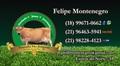 Felipe montenegro cart%c3%a3o